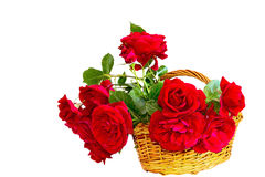 Red roses in a basket on a white background. Bouquet of red roses in a wicker basket isolated on white background Stock Photography