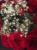 Red roses. Beautiful Roses red bouquet. Party Royalty Free Stock Images