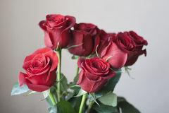 Red roses. Beautiful present is a bouquet of red roses stock photography