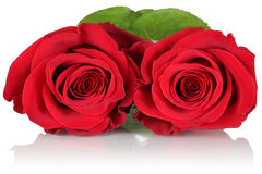 Red roses on birthday, Valentine's or mother's day Stock Images