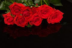 Red roses on black Stock Photos