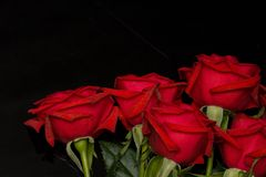 Red roses on black Stock Photo