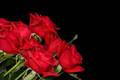 Red roses on black Stock Photography