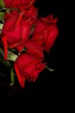 Red roses on black Royalty Free Stock Photos