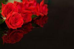 Red roses on black stock image