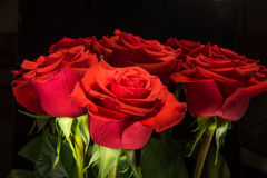 Red roses on black background Stock Photos