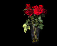 Red Roses on  Blackbackground Stock Images