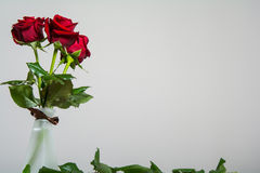 Red roses on blank background. Red roses on slate background with space for text stock photo