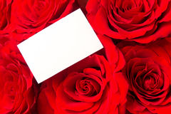 Red roses and blank card Royalty Free Stock Photography