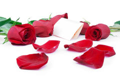 Red roses with a blank gift card. On a white background Royalty Free Stock Photography