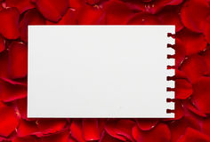 Red roses with a blank note Stock Images
