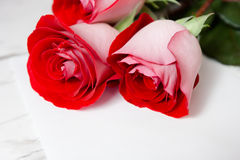 Red roses and a blank sheet of paper Stock Photo