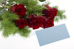 Red roses with a blue place card Stock Photos