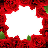 Red roses boarder. With blank white background Royalty Free Stock Photography