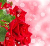 Red roses with bokeh background Stock Photo