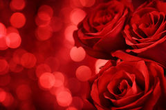 Red roses on bokeh background Royalty Free Stock Photo