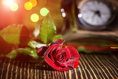 Red Roses Bokeh Stock Images 1 755 Photos