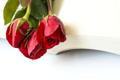 Red roses book. Red roses on a book under white background Stock Photos