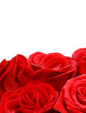Red roses border Royalty Free Stock Photography