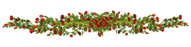 Red roses border Stock Photos