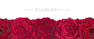Red roses border seamless pattern with romantic hand drawn flower blooms isolated on white background. Beautiful floral vector illustration with rose blossom Royalty Free Stock Photo