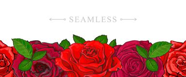 Red roses border seamless pattern with romantic hand drawn flower blooms. Red roses border seamless pattern with romantic hand drawn flower blooms isolated on Royalty Free Stock Photo
