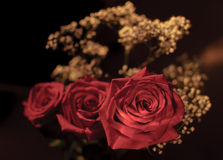 Red roses. In the bouquet Royalty Free Stock Photos