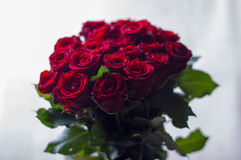 20 red roses bouquet Royalty Free Stock Photo
