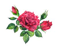 Red roses bouquet. Isolated watercolor floral illustration vector illustration