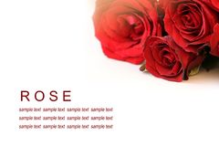 Red roses bouquet on white background, greeting card Stock Photo