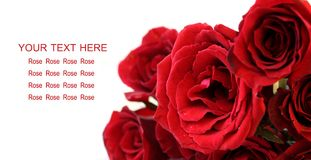Red roses bouquet on white background, greeting card Royalty Free Stock Photo