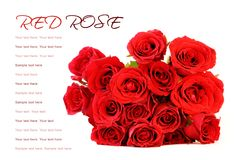 Red roses bouquet on white background with sample text Royalty Free Stock Photography