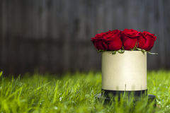 Red roses bouquet in white gift box on the background of green grass Royalty Free Stock Photo