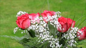 Red roses bouquet with white gypsophila stock video