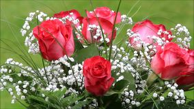 Red roses bouquet with white gypsophila stock video footage
