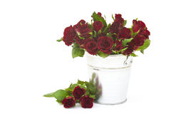 Red roses in a bucket Royalty Free Stock Photography