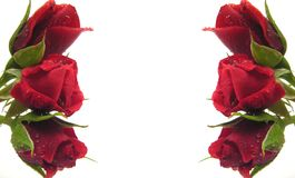 Red roses build a frame as background Stock Photography