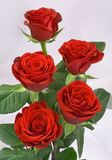 Red_roses_bunch Royalty Free Stock Photos