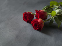 Red roses in a bunch on a grey background. With space for text Royalty Free Stock Photo