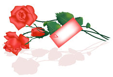 Red roses with card Stock Images