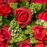 Red roses close up Background Royalty Free Stock Image