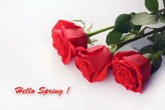 Red roses closeup. Beautiful bouquet. Hello Spring card Stock Images