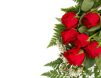 Red Roses With Copy Space. Six beautiful red roses isolated on a white background with room for your text Royalty Free Stock Photos