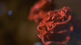 Red Roses on dark background. Beautiful flowers in light blicks, Symbol of Love stock footage