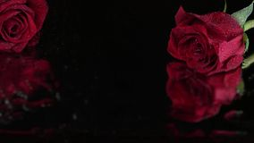 Red roses with dew on Glass with Reflection. Close-up of red roses with defocused reflection stock footage