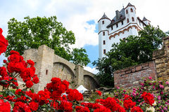 Red roses in Eltville am Rhein, Germany. Red roses in Castle Garden of Eltville am Rhein, Germany Stock Images
