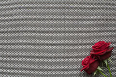 Red roses on empty grid background. Red roses on background with space for text royalty free stock images