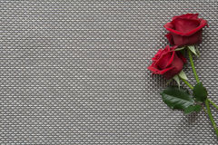 Red roses on empty grid background. Red roses on background with space for text royalty free stock photography