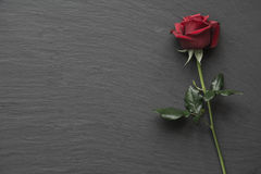 Red roses on empty slate background. Red roses on slate background with space for text royalty free stock photos