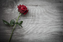 Red roses on empty wooden background. Red roses on background with space for text stock images
